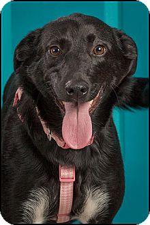 Labrador Retriever Mix Dog for adoption in Owensboro, Kentucky - Willow