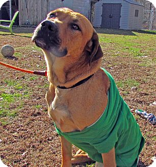 American Staffordshire Terrier Mix Dog for adoption in North Kingstown, Rhode Island - Gypsy