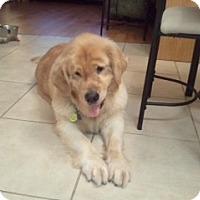 Adopt A Pet :: Sami - Foster, RI