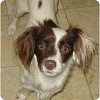 Adopt A Pet :: Ellie - San Diego County, CA
