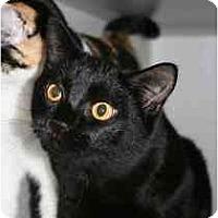 Adopt A Pet :: Doodle Bug - Marietta, GA