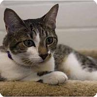 Adopt A Pet :: Ruby - New Port Richey, FL