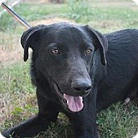 Adopt A Pet :: Ace - Stilwell, OK
