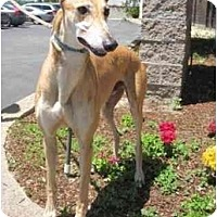 Adopt A Pet :: Kazoo - Carlsbad, CA