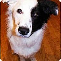 Adopt A Pet :: Zip - Salt Lake City, UT