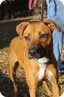 Hound (Unknown Type)/Pointer Mix Dog for adoption in Waldorf, Maryland - Jackie