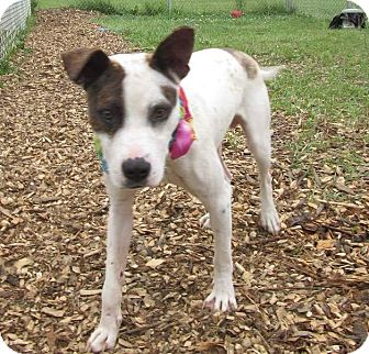Terrier (Unknown Type, Medium) Mix Dog for adoption in Flint, Michigan - Lokie - Adopted