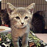 Adopt A Pet :: Illume - Lawrenceville, GA