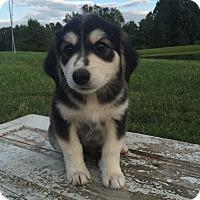 Adopt A Pet :: Jetta - Russellville, KY