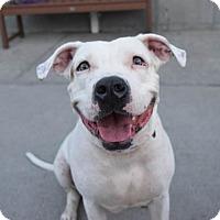 Adopt A Pet :: Brooklyn - Prospect, CT