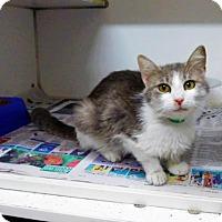 Adopt A Pet :: Fili-042010K - Tupelo, MS
