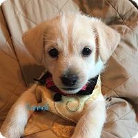 Adopt A Pet :: Cannoli - Brea, CA