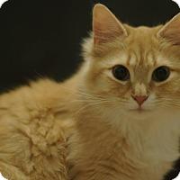Adopt A Pet :: Tessa - Stafford, VA