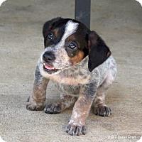Adopt A Pet :: Crockett - Bedford, VA