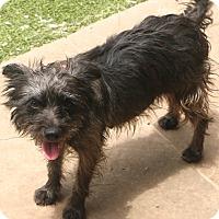 Adopt A Pet :: Mitzi - Allentown, PA