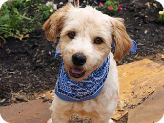 Terrier (Unknown Type, Medium) Mix Dog for adoption in Princeton, Kentucky - Louie