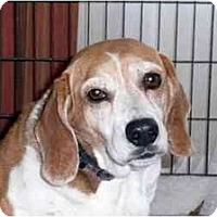 Adopt A Pet :: T-Bone - Phoenix, AZ