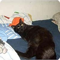 Adopt A Pet :: Sweety Pi - Jenkintown, PA