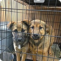 Adopt A Pet :: Jack ADOPTION PENDING - Danbury, CT