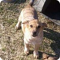 Adopt A Pet :: Puppies - Delano, MN