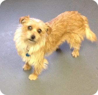 Terrier (Unknown Type, Small) Mix Dog for adoption in Meridian, Idaho - Zoey