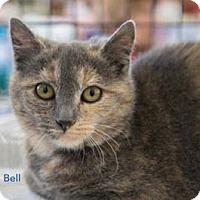 Adopt A Pet :: Bell - Merrifield, VA