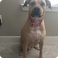 Adopt A Pet :: Lilly - Austin, TX