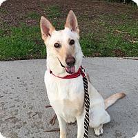 German Shepherd Dog/Labrador Retriever Mix Dog for adoption in Redondo Beach, California - Hannah..a great family dog!
