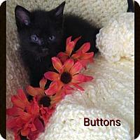 Adopt A Pet :: Buttons - Jasper, IN