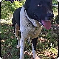 Adopt A Pet :: Jayne - Ahoskie, NC