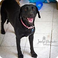 Adopt A Pet :: Egret - Houston, TX