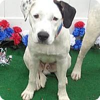 Adopt A Pet :: Dale - Tampa, FL