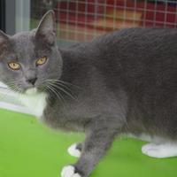 Adopt A Pet :: Mona - New Iberia, LA