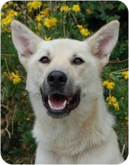 German Shepherd Dog Mix Dog for adoption in Los Angeles, California - Hailey von Corbit