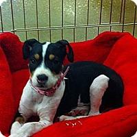 Adopt A Pet :: Hannah - Silsbee, TX