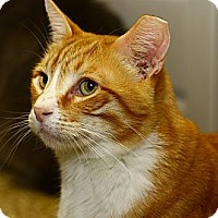 Adopt A Pet :: Wafer - Lombard, IL