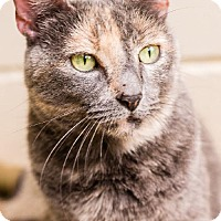 Adopt A Pet :: Mavonne - Fairhope, AL