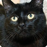 Adopt A Pet :: Gidget - Irvine, CA
