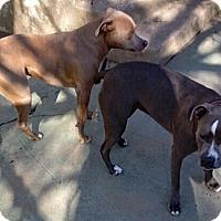 Adopt A Pet :: Nix - Ogden, UT