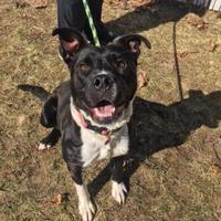 Adopt A Pet :: Mitzy - Muskegon, MI