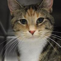 Adopt A Pet :: Ravioli - Lafayette, IN