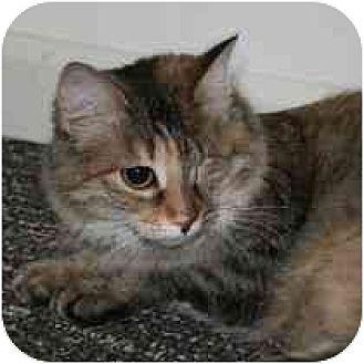 Domestic Mediumhair Cat for adoption in Marietta, Georgia - Michelle