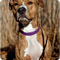 Adopt A Pet :: Bailey - Warren, NJ