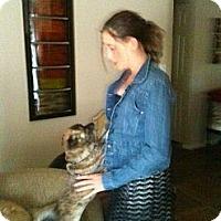 Adopt A Pet :: Louie - Only $25 adoption fee! - Litchfield Park, AZ