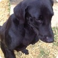 Adopt A Pet :: Prince - Lewisville, IN
