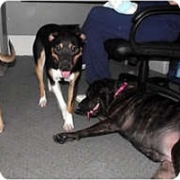 Adopt A Pet :: Rex (courtesy listing) - Indianapolis, IN