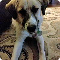 Adopt A Pet :: Marley - Minneapolis, MN