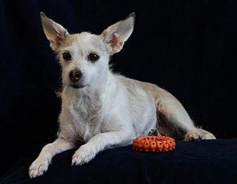 Terrier (Unknown Type, Medium) Mix Dog for adoption in Phelan, California - Millie
