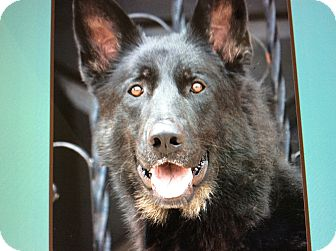 German Shepherd Dog Dog for adoption in Los Angeles, California - RUFF VON WINKLE