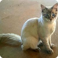 Adopt A Pet :: Romeo - Dallas, TX